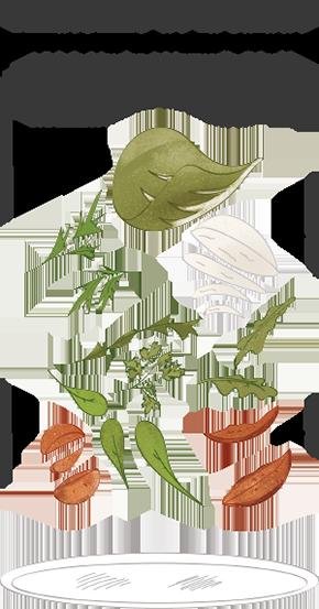 Composition d'une salade selon Station Pizza. Salade Mesclun, Mozzarella, Tomates séchées, Tomates cerise.